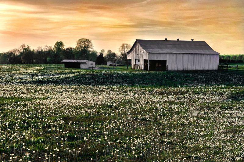 House by farmland
