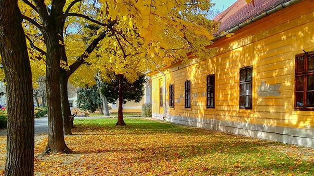autumn, change, tree, architecture, built structure, building exterior, grass, leaf, outdoors, no people, day, nature, green color, the way forward, yellow, growth, beauty in nature, sky