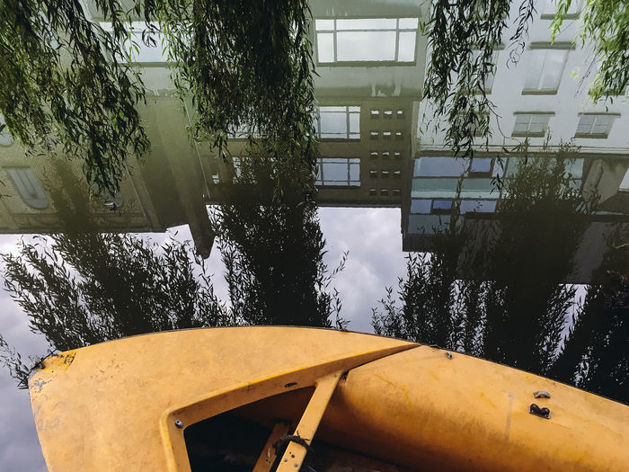 Reflection of trees on building
