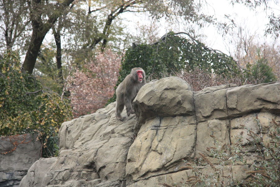 Animal Animal Themes Animal Wildlife Animals In The Wild Baboon Day Full Length Mammal Monkey Nature No People One Animal Outdoors Travel Travel Destinations Tree Zoology