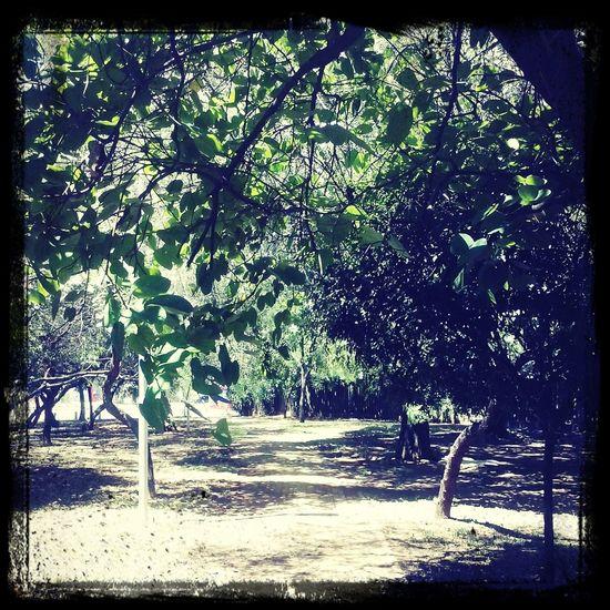 antes de chega no show , unica foto tirada ! mais valeu , green way ! Reclivre Maiquemaia Familia 4 Vidas  Cohabitation