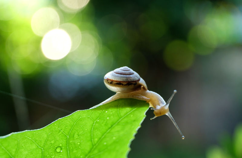 Close-up of snail on leaf