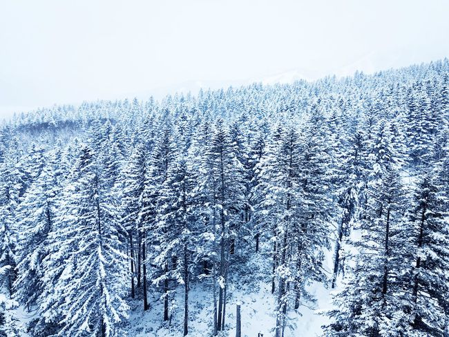 Risonaretomamu Hoshinoya Tomamu Japan Hokkaido Snowcovered Snowboarding Skiing Winter Snow Cold Temperature Nature Forest Beauty In Nature Weather Frozen Mountain Outdoors Snowcapped Mountain No People Tranquil Scene WoodLand Landscape Tree Tranquility