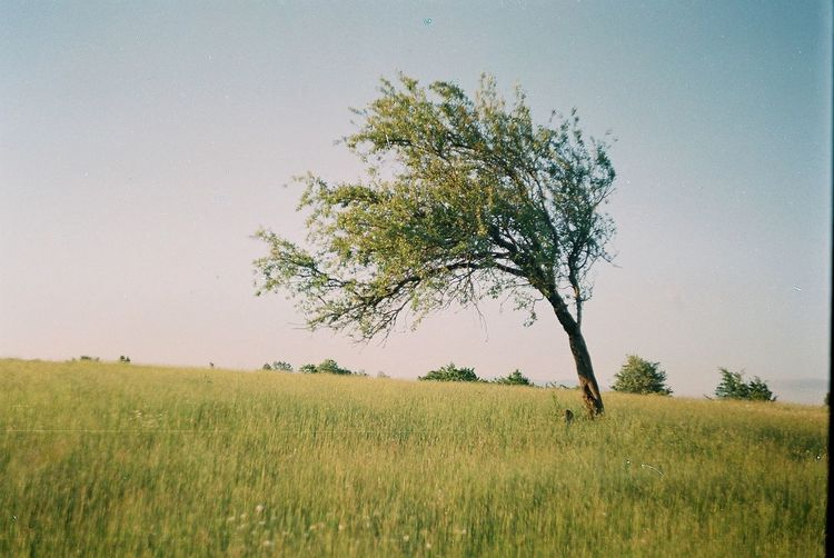 Film Tree Beauty In Nature Clear Sky Environment Field Film Photography Freedom Grass Green Color Growth Isolated Land Landscape Meadow Nature Outdoors Plant Rural Scene Scenics - Nature Single Sky Tranquil Scene Tranquility Tree