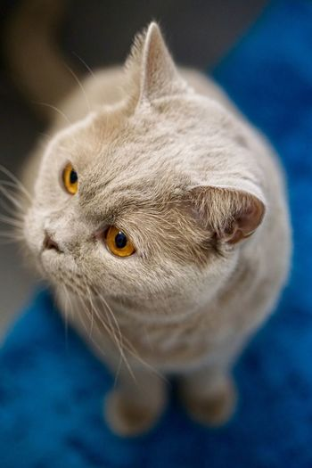 High angle view of cat looking away