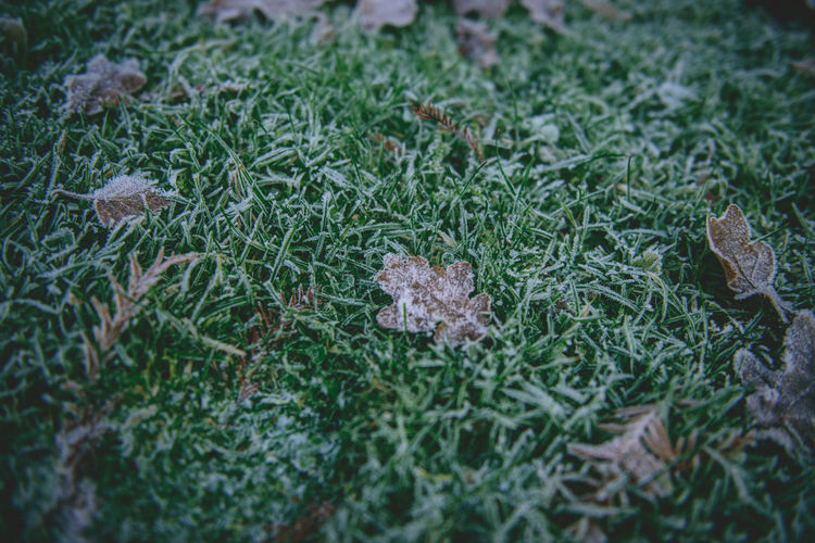 Beauty In Nature Close-up Day Field Full Frame Grass Leaves Nature No People Outdoors Winter Winter Has Arrived