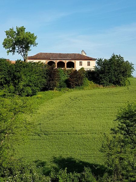 Agriculture Tree House Front Or Back Yard Day Outdoors Green Color Architecture Rural Scene No People Growth Sky Built Structure Building Exterior Nature Hill Rural Building Farm Crop  Langhe Piedmont Italy