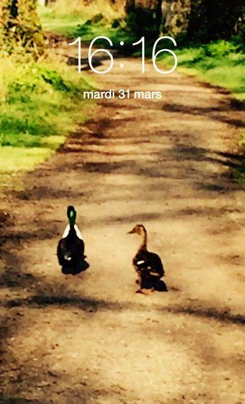 Côte à côte 😊👍👍 Clock Heure HEURE POLARIS Charente France Paysage Nature Oiseaux Balades On The Road
