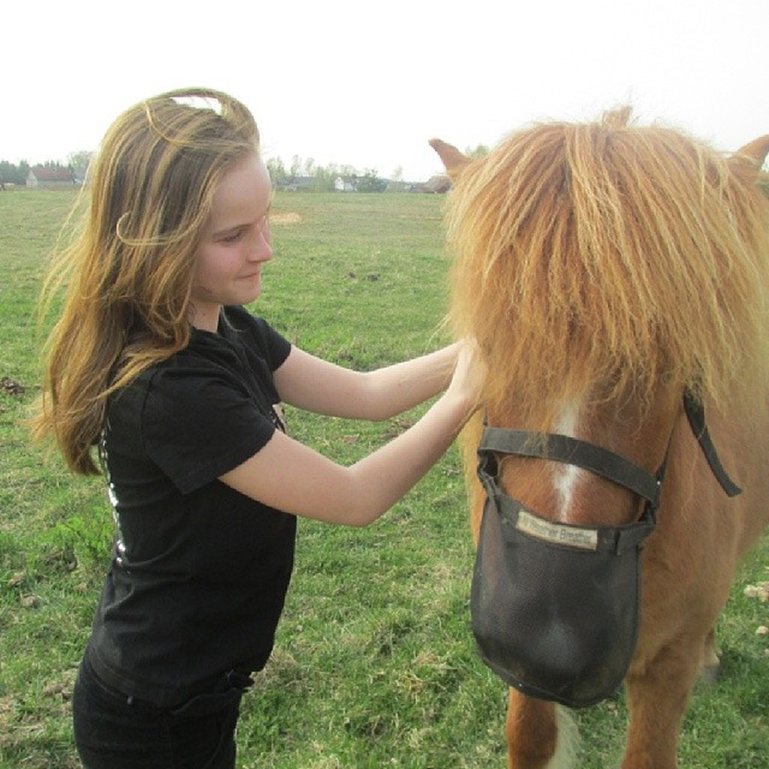 grass, field, long hair, person, young adult, young women, domestic animals, leisure activity, lifestyles, casual clothing, grassy, livestock, blond hair, standing, portrait, animal themes, looking at camera, horse