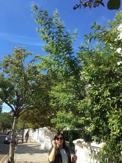 Plant Tree One