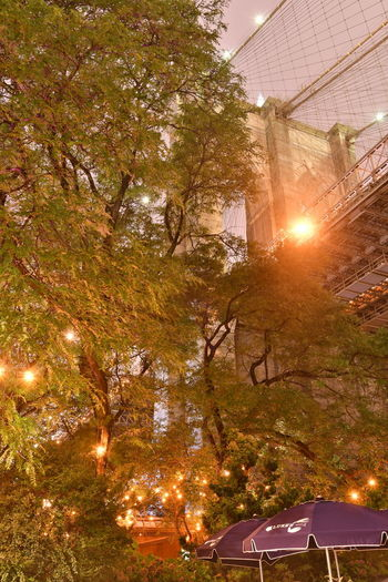 New York Brooklyn Bridge / New York New York New York City Architecture Branch Building Building Exterior Built Structure Bulb Bulbs City Growth Illuminated Lens Flare Lighting Equipment Low Angle View Nature No People Outdoors Plant Sky Sun Sunbeam Sunlight Tree