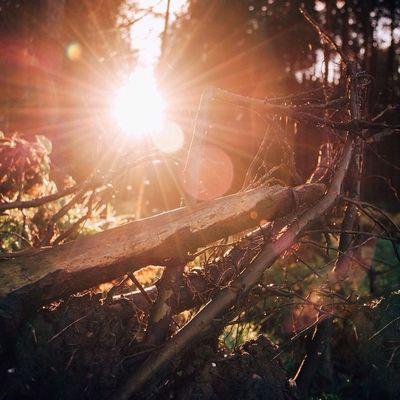 Naturamente Naturelovers Natureshots Ig_britishisles hidden_ukukpotdicu_britaincapturingbritain_naturecapturingbritainnexus_naturersa_naturesunsetsky sunset_captures_ sunsetoftheday sunset_hunterfiftyshades_of_naturetreessunsetsplendid_shotsloves_united_kingdom