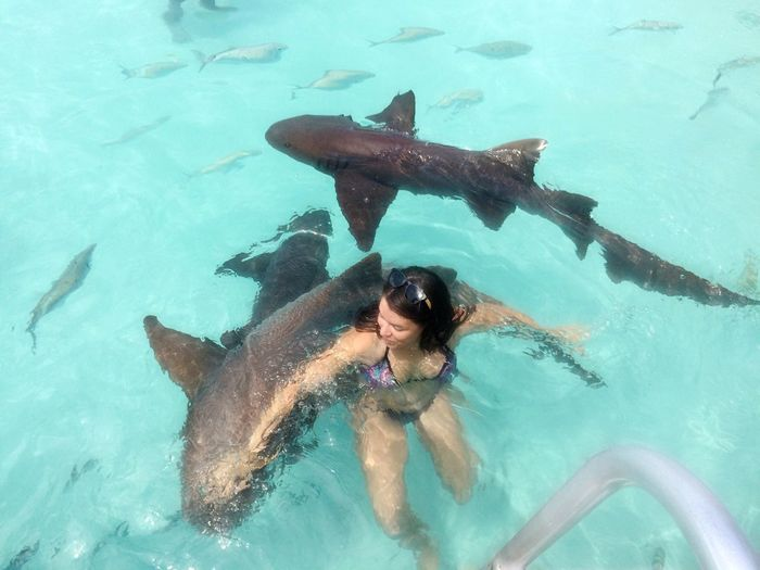 High angle view of young woman swimming with nurse sharks in pool