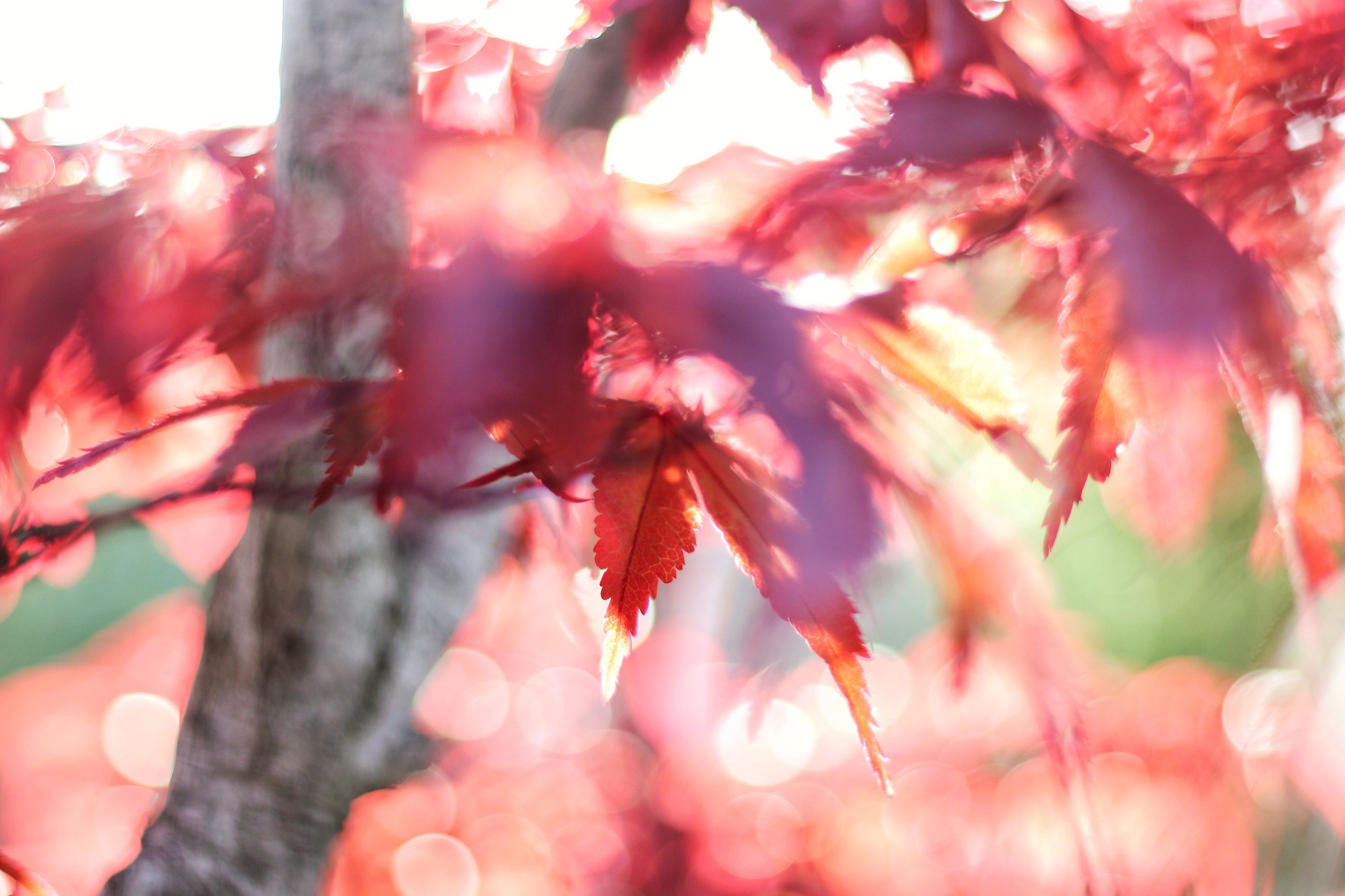 autumn, nature, leaf, beauty in nature, outdoors, no people, day, change, close-up, growth, tree, red, fragility