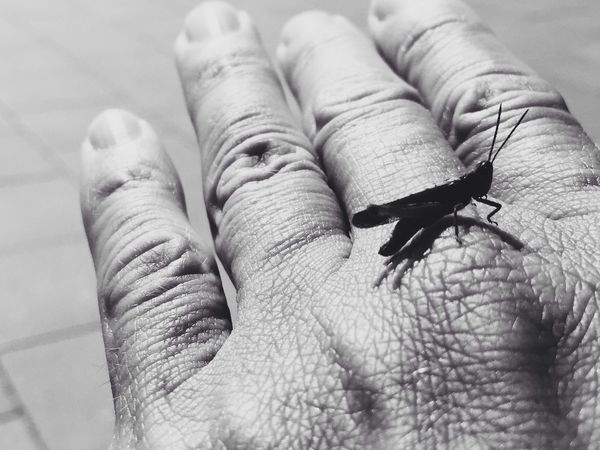 Black And White Summer Hand Crickets TheWeekOnEyeEM