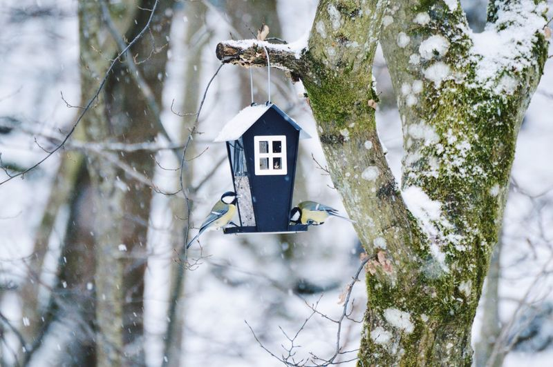 Great tits perching on bird house in forest during winter
