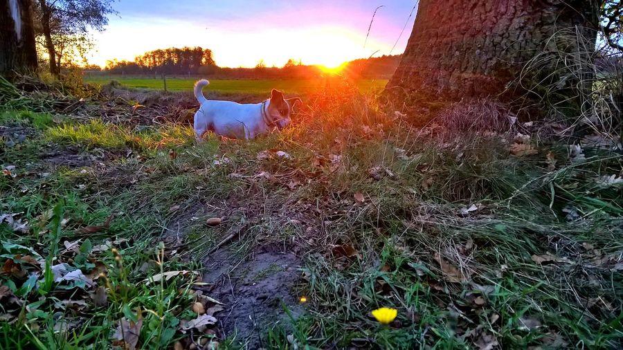 Sun shining through grassy field