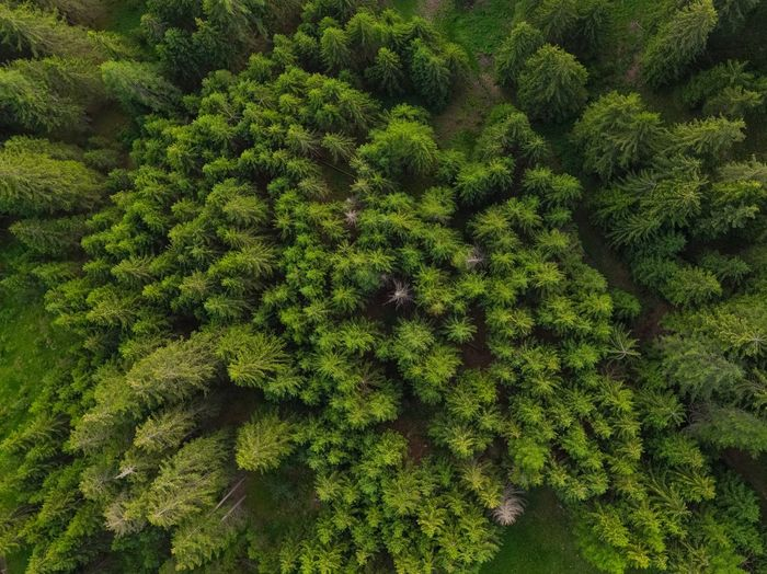 Wald - Bosco -