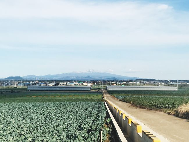 JEJU ISLAND  Day Agriculture Nature Outdoors Beauty In Nature Sky Field Mountain Landscape Growth Scenics Green Color Rural Scene Cloud - Sky Tranquil Scene No People Tranquility Plant