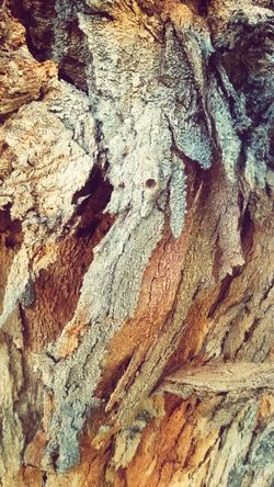 Tree Textures In Nature Treebark Brazil