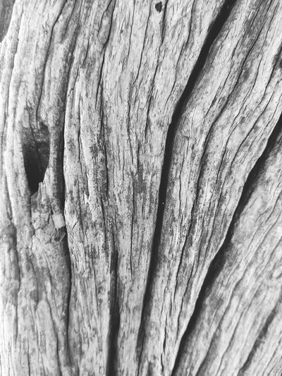 wood EyeEm Selects Tree Bark Blac And White
