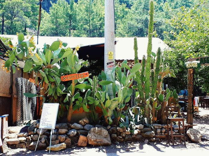 Plants and chairs against trees