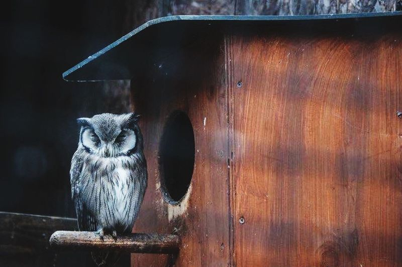 owl Owl England Birds Bird Vscocam Wildlife Taking Photos Cute