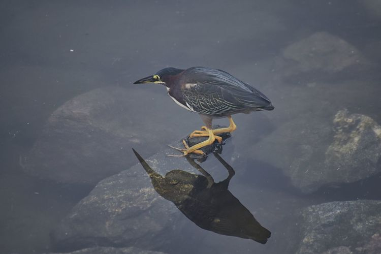 High angle view of bird perching on a lake