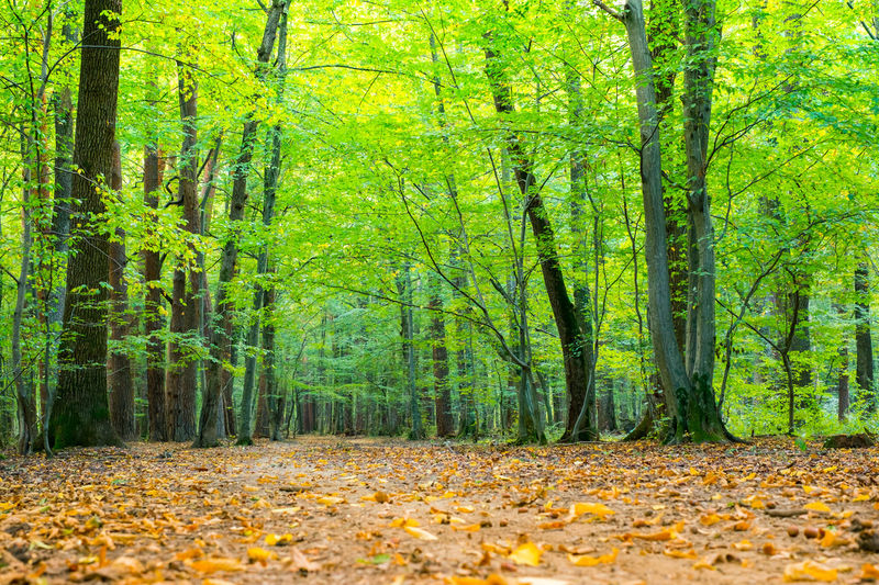 Spring forest day landscape. Spring Forest Day Landscape. Forest Tree Autumn Plant Land Leaf Plant Part WoodLand Beauty In Nature Nature Tree Trunk Tranquility Change Trunk Environment Day Green Color Scenics - Nature Tranquil Scene Landscape No People Outdoors Leaves