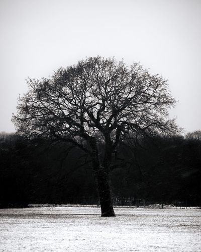 Bare tree on field against clear sky