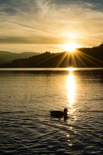 Sunset Reflection Lake Nature Sunlight Sun Water Outdoors One Animal Tranquility