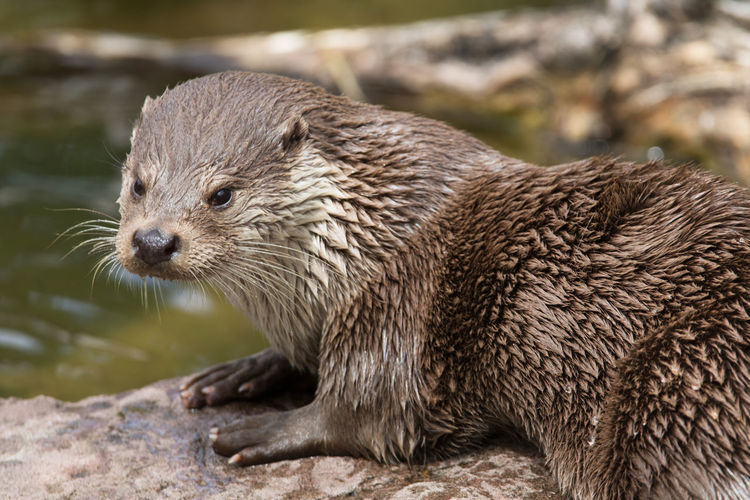 Otters Otters