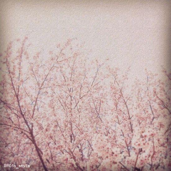 アノヒノサクラ で、いちずすたいる。 01s_style EyeEm Tokyo MeetUp 12 Shinjyukugyoen Cherry Blossoms Minimalism Minimal