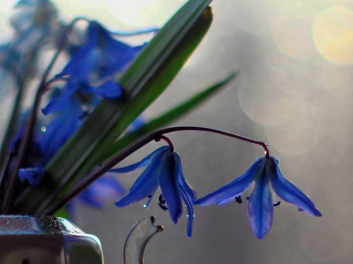 Close-up of raindrops on purple flowering plant