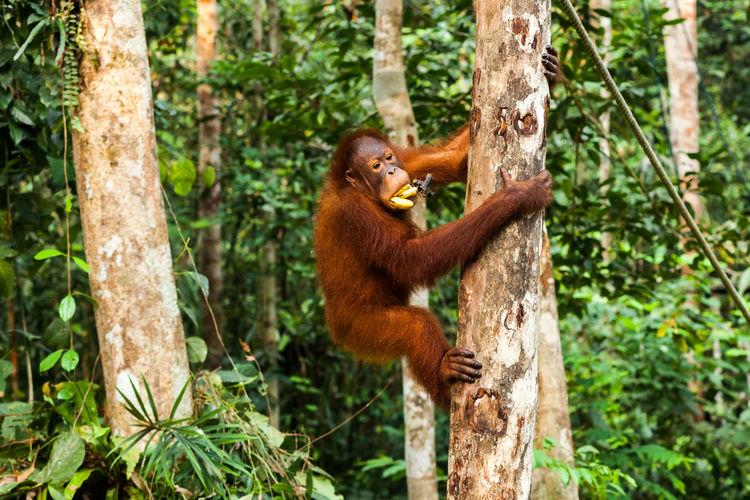 Monkey on tree trunk in forest