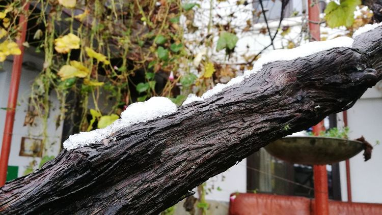 Snow~~~ Snow ❄ Wood - Material Tree No People Nature Beauty Of Nature Close-up Cold Weather Winter 2017