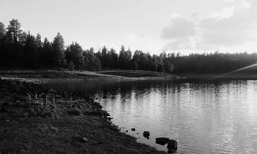 Monochrome Photography Hawleylake Black And White Friday