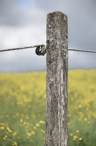 Barrier Close-up Day Fence Field Focus On Foreground Land Landscape Metal Nature No People Outdoors Wood - Material Wooden Post Yellow