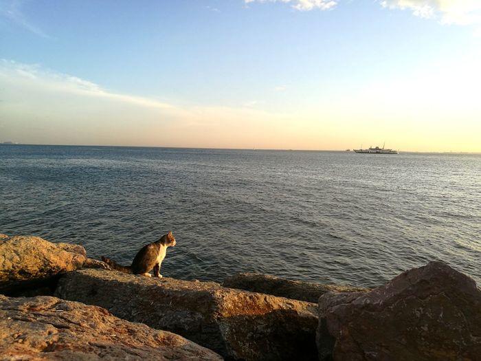 Clear Sky Cat EyeEm Best Shots EyeEm Nature Lover EyeEnOnInstagram EyeEm Selects Water Sea Sunset Beach Sand Sky Horizon Over Water Seascape Coast Rocky Coastline Ocean Coastline Calm
