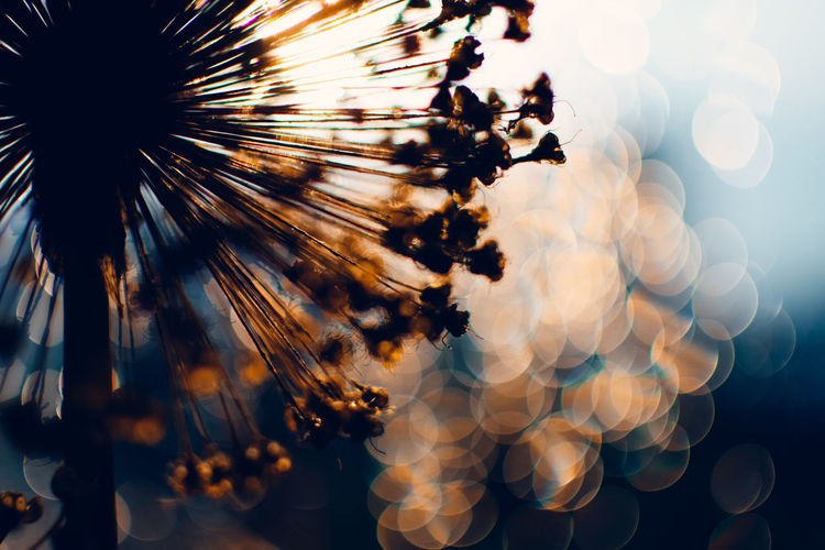 Happy New Year 🙋‍♂️ Exceptional Photographs Bokehlicious Bokeh Lights Bokeh Love EyeEm Nature Lover Poland Multi Colored Defocused Backgrounds Abstract Silhouette Full Frame Sunlight Sky Close-up