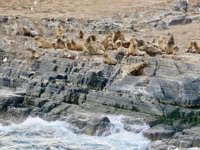 Scenic view of sea lions