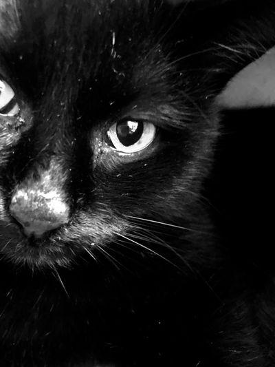 BLackCat Schwarzerkater Ilovemycat Animallovers Blackandwhite Photography Louis Chatnoir