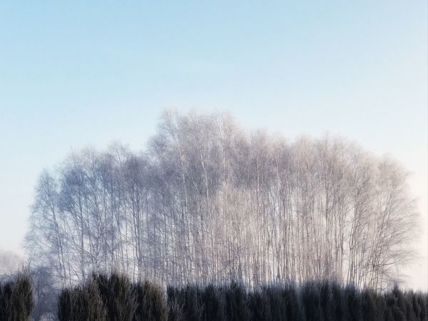 Beauty In Nature Clear Sky Day Grass Growth Low Angle View Nature No People Outdoors Sky Tranquil Scene Tranquility Tree Shades Of Winter