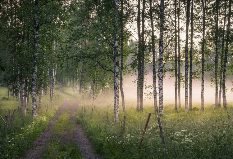 Idyllic landscape with road and fog at summer night in middle Finland Atmospheric Mood Beauty In Nature Birch Evening Fence Fog Foggy Forest Grass Landscape Lush Foliage Mist Morning Light Nature No People Outdoors Path Peaceful Pure Road Scenics Summer Summer Nights Summertime Tree