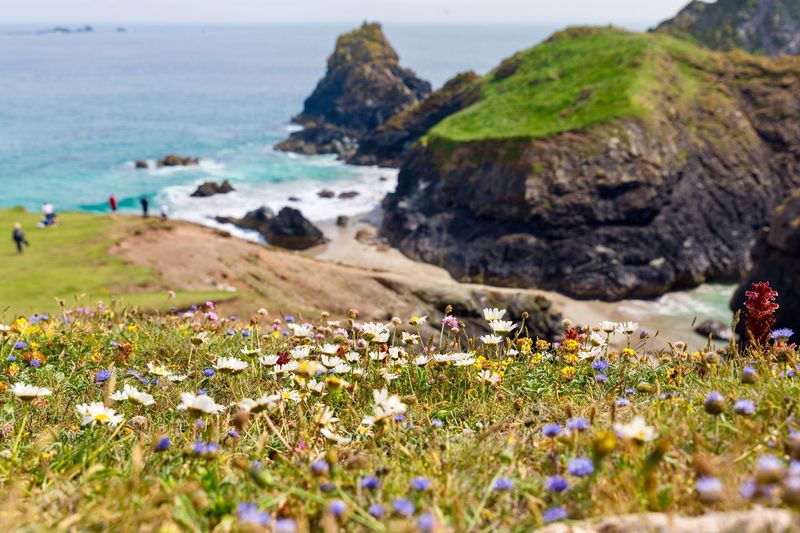 Wild flowers in Cornwall Seaside Seascape England Travel Cornwall Uk Vacation Holidays In Cornwall Adventures In Cornwall Cornwall EyeEm Nature Lover Cornish Love Cornwall Visit Cornwall Beauty In Nature Land Flower Flowering Plant Plant Sea Water Beach Growth Nature Tranquility Scenics - Nature Tranquil Scene Freshness Fragility Rock Outdoors