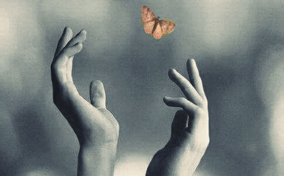 Papillon Lost In Space... Life Liberty