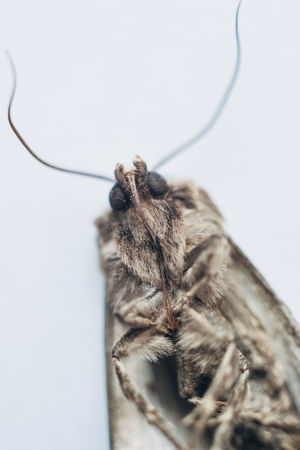 Animal Animal Body Part Animal Themes Animal Wildlife Animals In The Wild Close-up Indoors  Insect Insect Photography Invertebrate Macro Mammal Moth Motte No People One Animal Pets Selective Focus