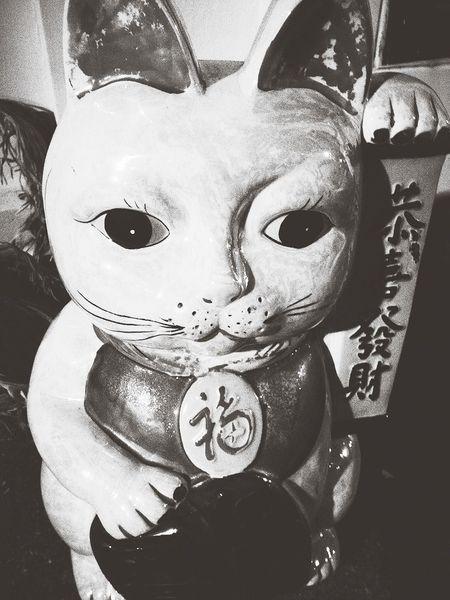 Lucky Cat Cat Monochrome Blackandwhite
