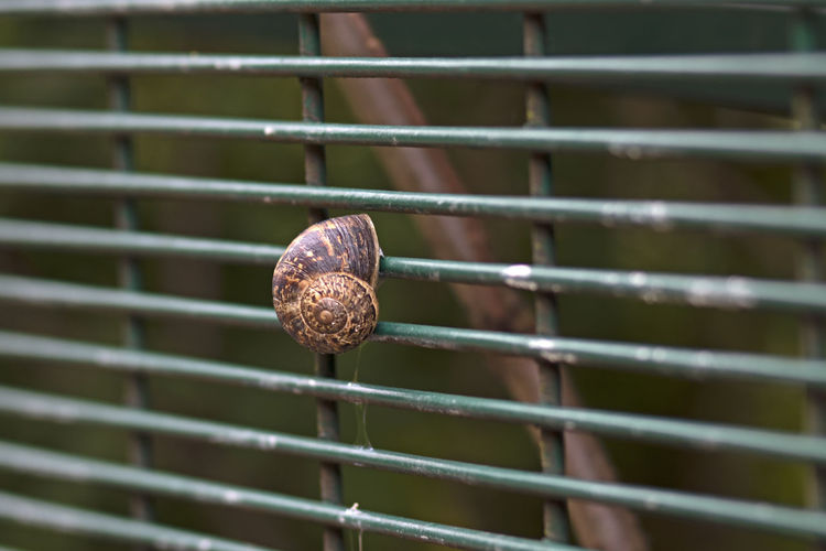 Close-up of snail on metal