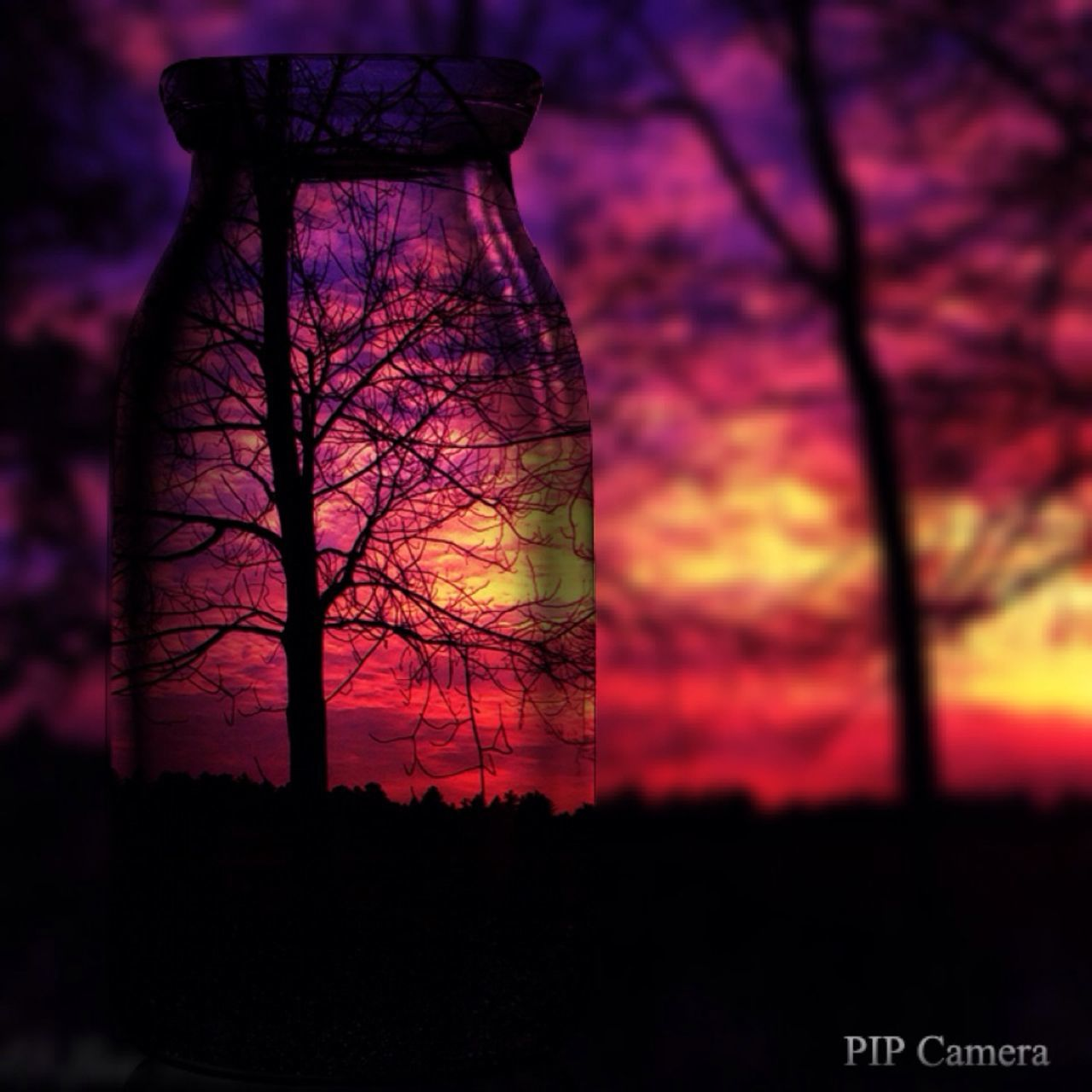sunset, silhouette, tree, sky, no people, nature, multi colored, beauty in nature, outdoors, close-up, day